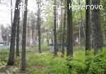 Земля в сосновом лесу + дом (недострой). Продажа.