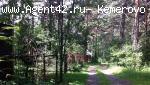 Земельный участок в Журавлях. Сосновый лес.